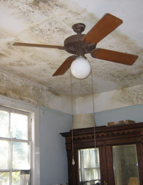 Mold damage after hurricane in Miami Florida